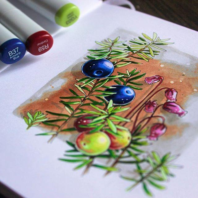 Вороника |crowberry    #lk_sketchflashmob, #art_markers, #art_we_inspire, #art, #sketchbook, #sketch, #illustration, #скетч, #иллюстрация, #скетчбук, #ботаника, #marker, #copicmarker, #copic, #copicart, #savannasketch, #botanical, #berries, #berry, #forest, #crowberry, #crowberries, #саамский_словарь