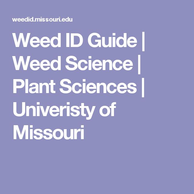 Weed ID Guide | Weed Science | Plant Sciences | Univeristy of Missouri