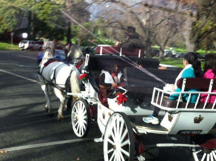 Horse cart in Melbourne!!