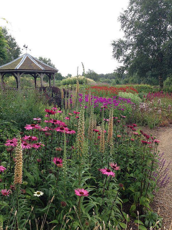 Digitalis, ferruginea, & Echinacea--Piet Oudolf's Millenium Garden, Pensthorpe Nature Reserve, Norfolk^