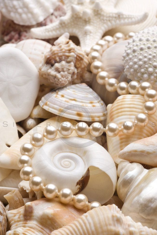Digital Download Discoveries for SHELLS from EasyPeach.com