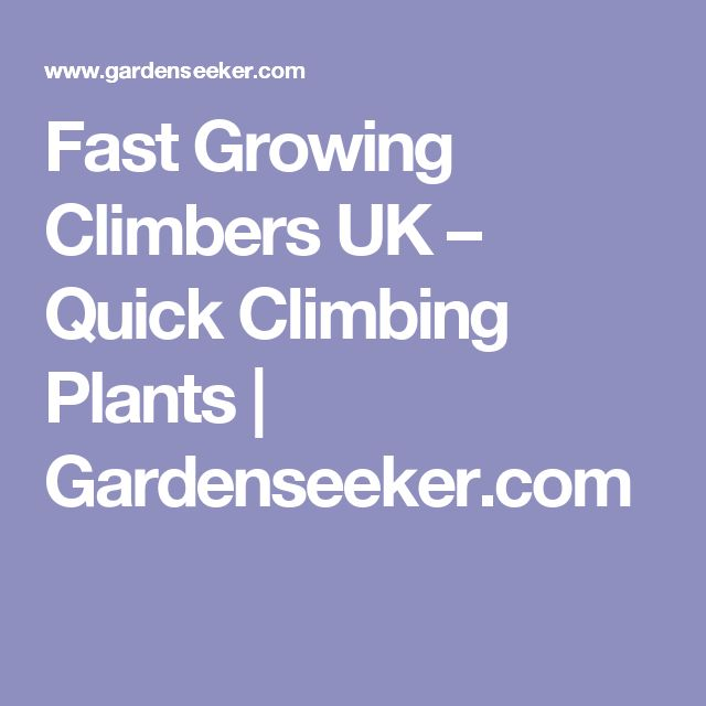 25 best ideas about uk climbing on pinterest climber. Black Bedroom Furniture Sets. Home Design Ideas