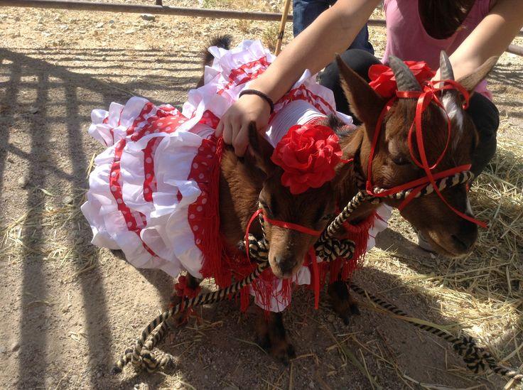 Fotos de la feria del ganado en #burunchel