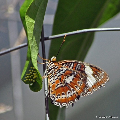 The Butterfly House from Dandenong Ranges Photography  http://dandenong-ranges-photography.com.au/the-butterfly-house @kathiemt Australian photographer