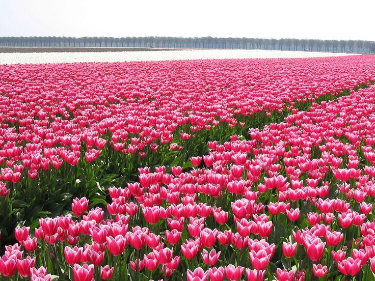 Holambra cidade das flores