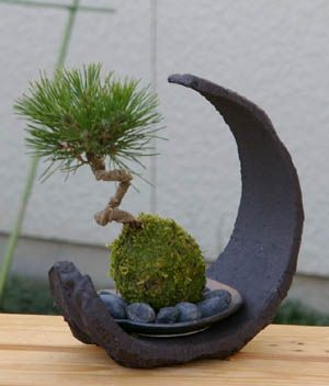 "I like the ""pot"" here - inspiration. Japanese Kokedama....Moss Ball Gardens"