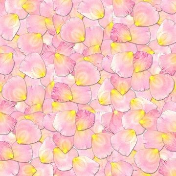 Rose petals - read more about flower waters (hydrosols) at herbhedgerow.co.uk