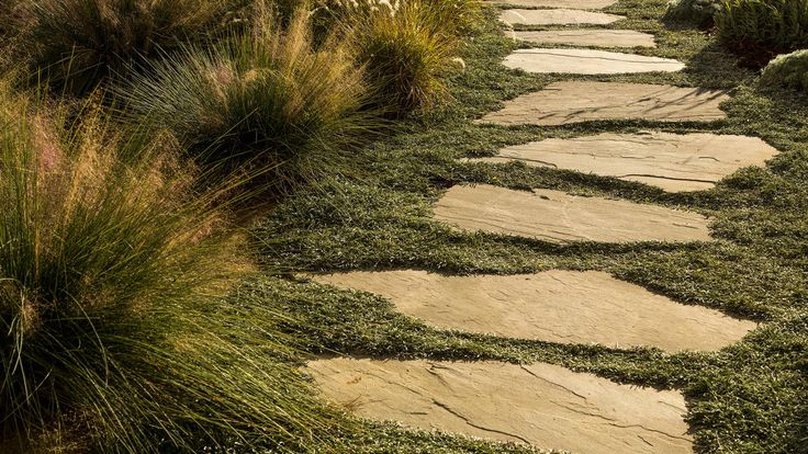 """Pavers: Dymondia margaretae lines the path to the front of this Santa Monica house. """"After its first year it will become a tight mat and will look stunning,"""" landscape designer Mimi Kahn says. She also planted mounding Muhlenbergia rigens (Deer grass), Provence lavender and Artemisia pycnocephala 'David's Choice'"""