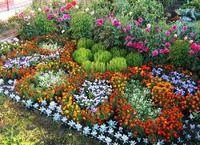 Какие цветы посадить на клумбе и как это сделать красиво!