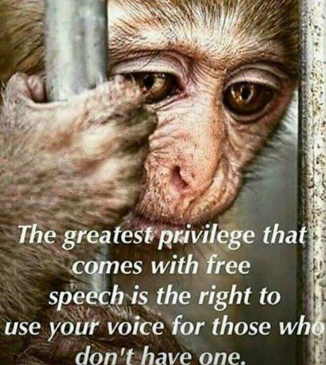 Worst, heartbreaking. This is all about harsh pain, torture & cruelty on helpless animals without any reason. Be the voice of all animals worldwide. Awareness plays a super important role for their safe & secure life So therefore, plz ppl spread awareness as much as one can through any medium. Plz help them as much as one can. Best wishes Go fur free & Vegan life.