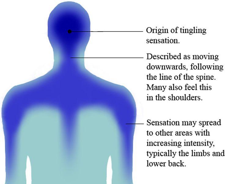Autonomous sensory meridian response - Wikipedia