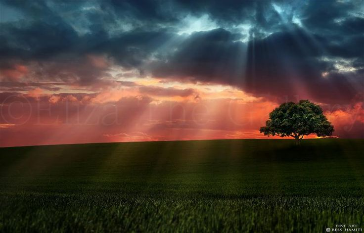 Amazing image from Bess Hamiti to see more please go to www.Facebook.com/ElizaTheArtGallery