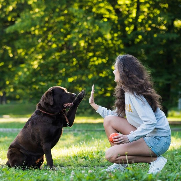 Download Woman Giving High Five To Her Dog For Free In 2020 Cute Small Dogs Dogs Surprised Dog