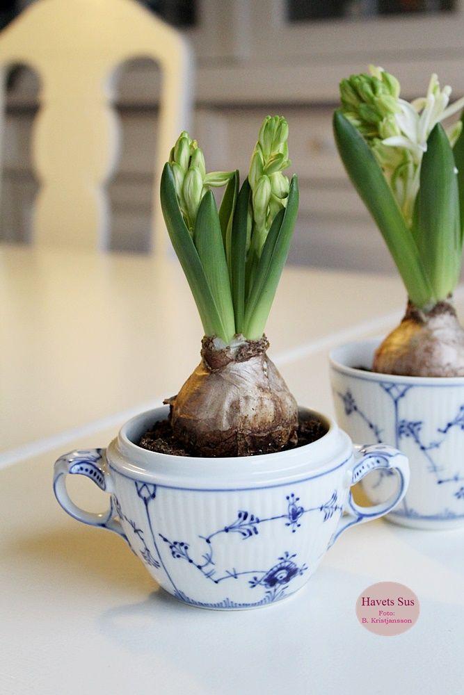 Royal Copenhagen - Bing & Grøndahl - musselmalet - flowers - hyacint - Havets Sus Royal Copenhagen