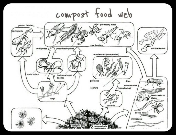 161 best FoOd CHaInS/WeBS, eCOsyStEMS, and BIoMes images