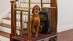Pet Friendly Lodging- Lord Camden Inn