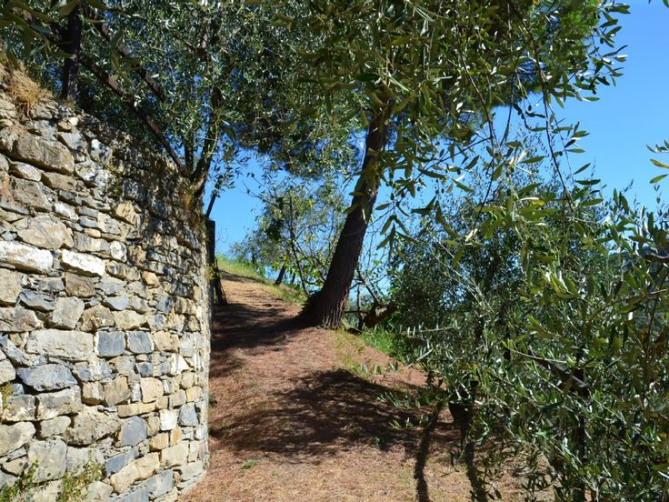 The Olive Trees in the Garden