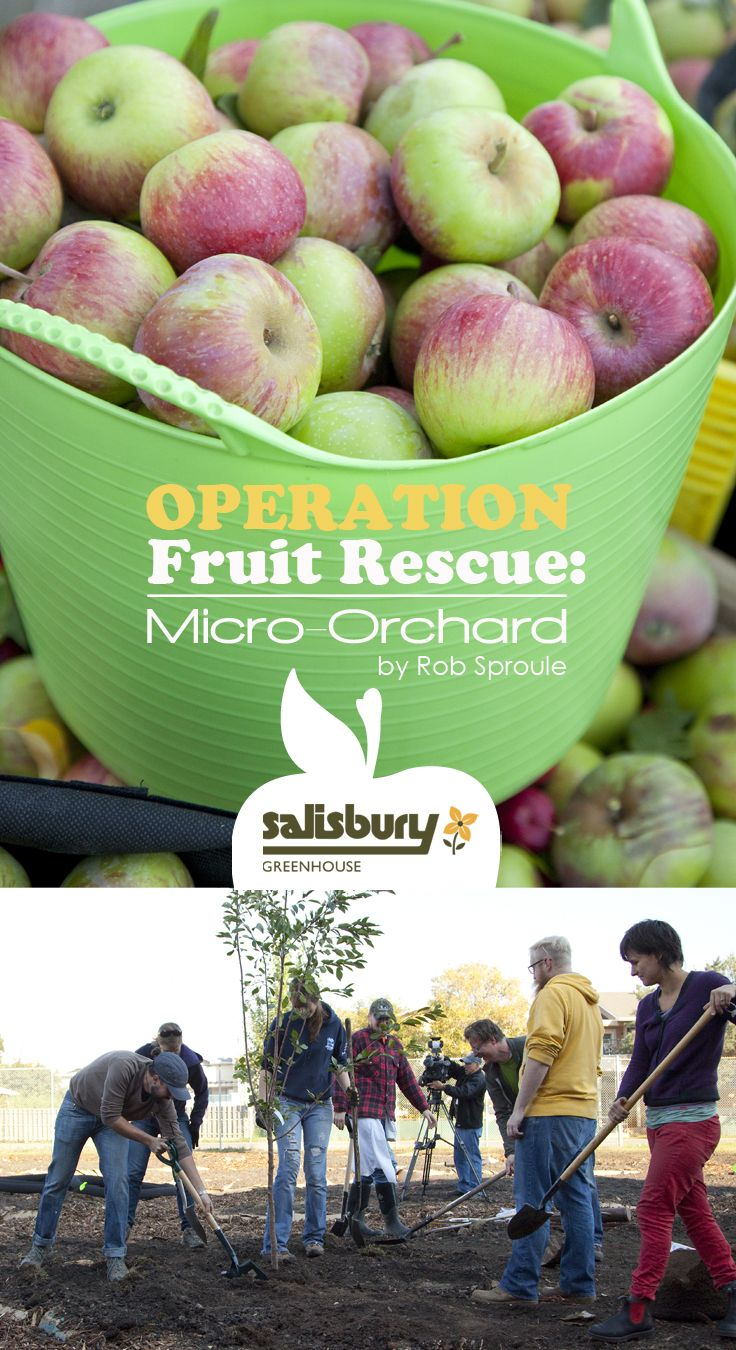 Inner-city #Orchard - Operation Fruit Rescue: Micro-Orchard By Rob Sproule, Salisbury Greenhouse