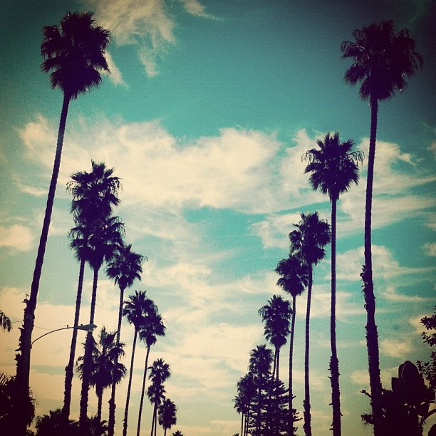 palms: Usa 2013, Favorite Places, California Dreamin, Dreamy Travel