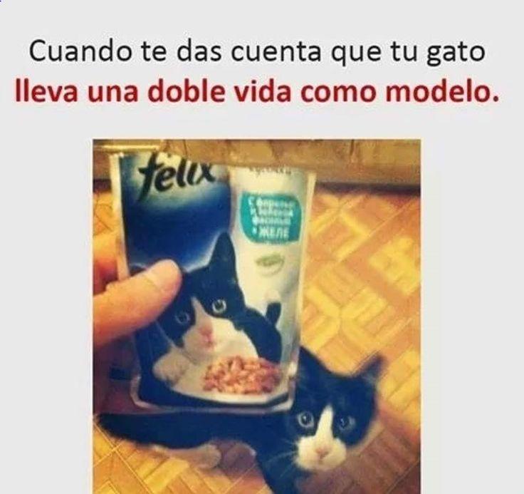 Imagenes de Humor #memes #chistes #chistesmalos #imagenesgraciosas #humor www.megamemeces.c... ➧➧ http://www.diverint.com/memes-chistosos-imagenes-comienzo-revolucion