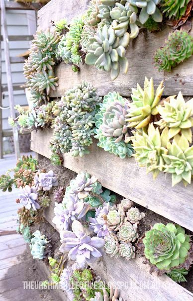 The Urchin Collective: DIY Recycled Pallet Vertical Succulent Garden I want one of these to hide the meter box on the corner of the house. I would add water retaining crystals to the soil to keep them moist in the hot Alabama summer