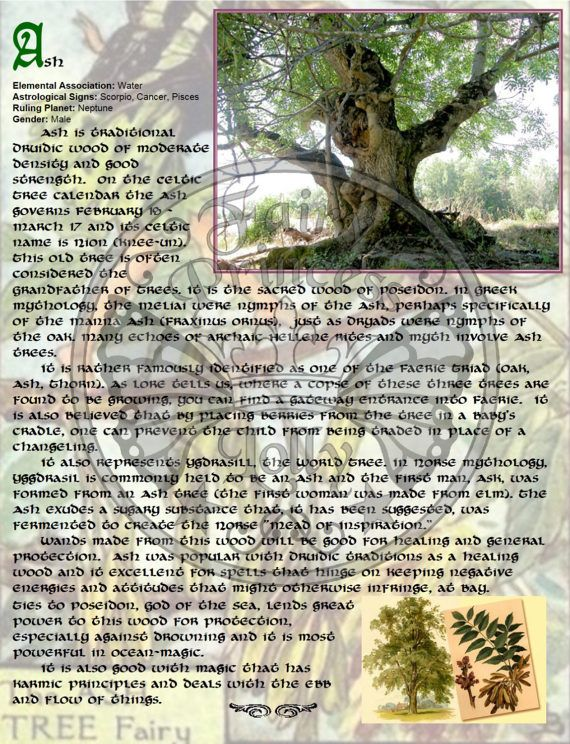 193 best gilded quill magical supply images on pinterest feather ash tree magic properties bos instant download page wand bark scrolls book of secrets glamerie pages fandeluxe Images