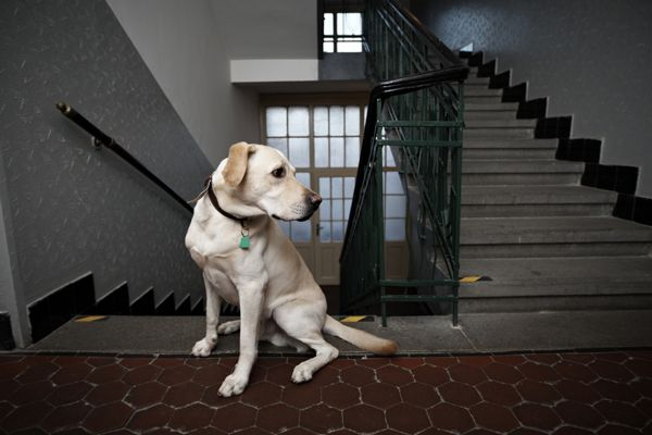 The 10 Best Apartment Dog Breeds: Why Size Doesn't Matter on having apartment dogs