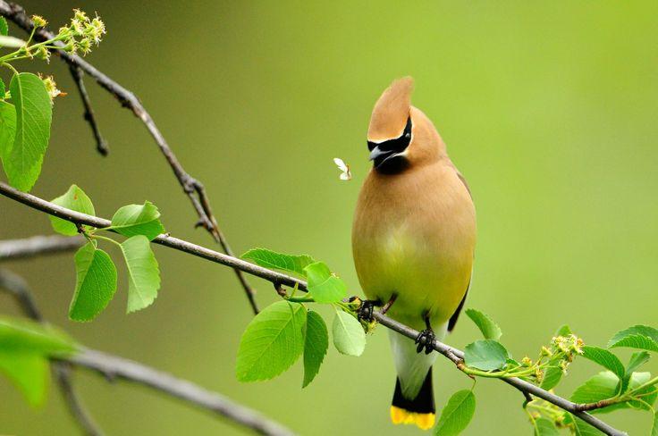 Птицы Животные | Красивые птицы, Обои с птицами, Животные