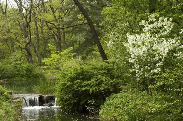 Beim Erstellen von eines japanischen Gartens sollten Sie die grundlegenden Prinzipien erinnern. Raum und Balance sind sehr wichtig, wie Bewegung und Ruhe ist. Achten Sie darauf, in vielen Fluss zu bauen und Elemente, die Ihnen helfen können, konzentrieren sich in den richtigen Zustand des Geistes.