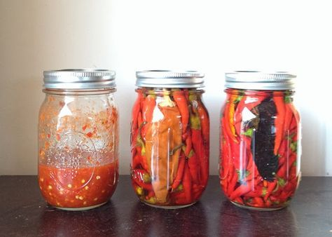 Homegrown Cayenne Pepper Hot Sauce. Cayenne pepper is one of the easiest peppers to grow and cayenne pepper hot sauce is even easier to make.