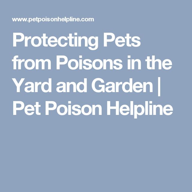 Protecting Pets from Poisons in the Yard and Garden | Pet Poison Helpline
