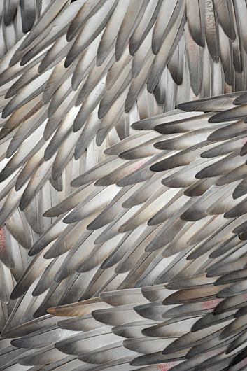 """Discharge"" by Kate MccGwire (pigeon feathers) from the exhibition Dead or Alive: Nature Becomes Art, Museum of Arts and Design, New York (2010)"