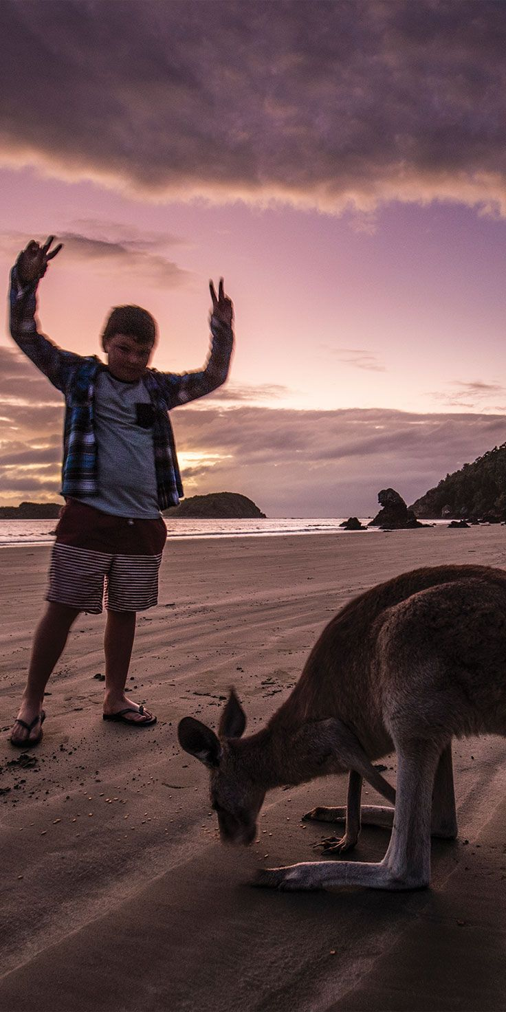 Making friends with the local wildlife on the beachfront at Cape Hillsborough, Mackay - by Sean Scott