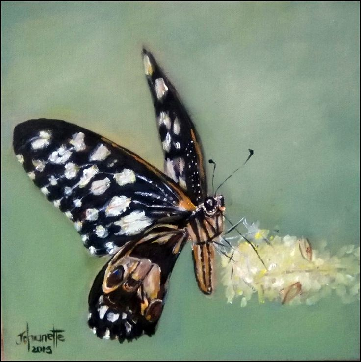 Skoenlapper Stretched Canvas 300x300x40mm