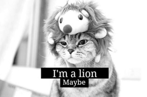 Immagine di lion, cat, and cute