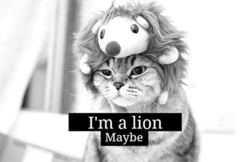 Immagine di lion, cat, and cute