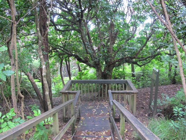 Kepa Bush Walk, Mission Bay, Auckland, New Zealand