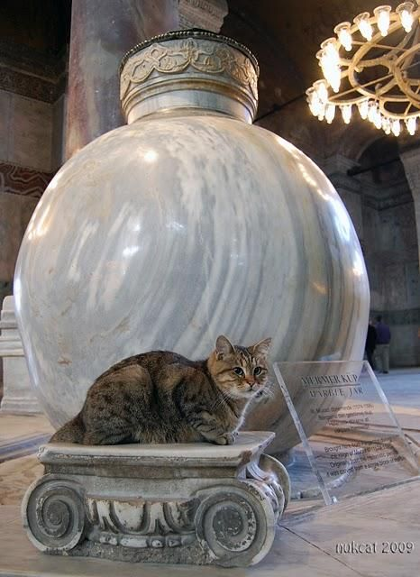 Ayasophia Museum -- This work of art needed a little extra touch. #Istanbul #cats #travel
