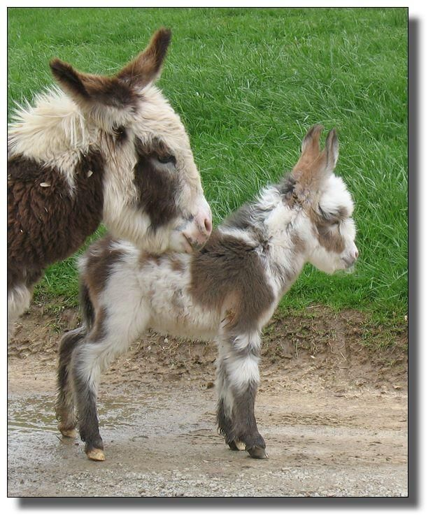 Exceptionnel Les Anons Du Varon #2: Petits ânes!