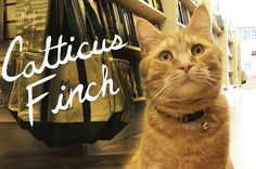 25 Literary Pun Names For Your Cat