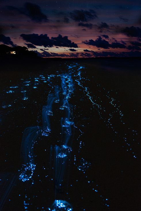 Glow plankton (phytoplankton in the Maldives: 27 Surreal Places To Visit Before You Die)