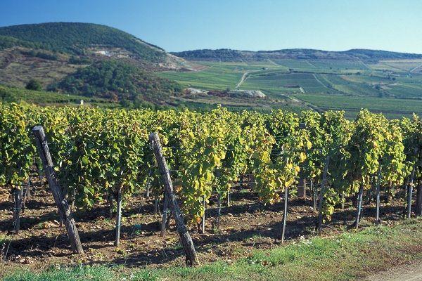 Tokaj-Hegyalja, Hungary's best-known wine region, has been declared a World Heritage Site