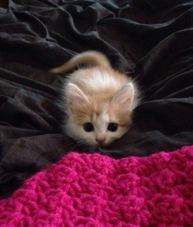 Este pequeño gatito que está LISTO para su primer salto.