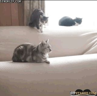 Cat Bomber - - GIF Stache - Funny Animated GIFs