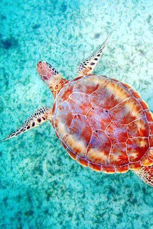 sea life #QuartersSpringBreak2015
