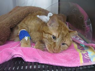 www.perfectpetowners.com: My cat was poisoned by a flea insecticide.