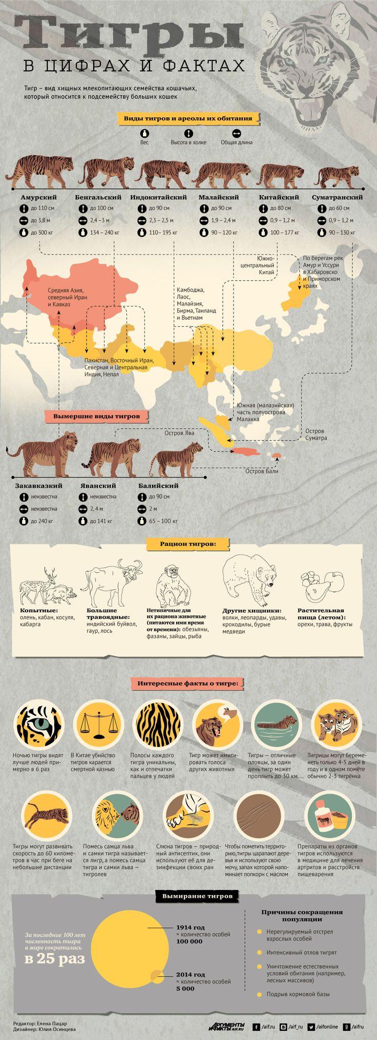 Тигры в цифрах и фактах. Инфографика | Инфографика | Вопрос-Ответ | Аргументы и…