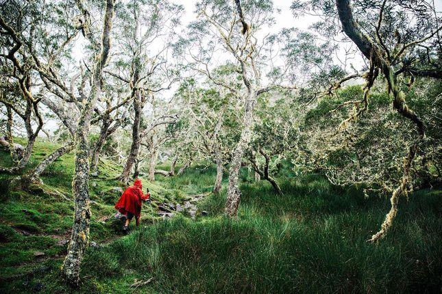 Réunion: Vandring bland palmer och vulkaner