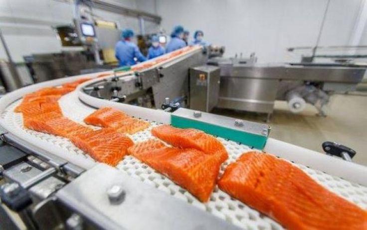Norský losos je jedna z nejjedovatějších potravin ve světě. Fakta, která překvapí