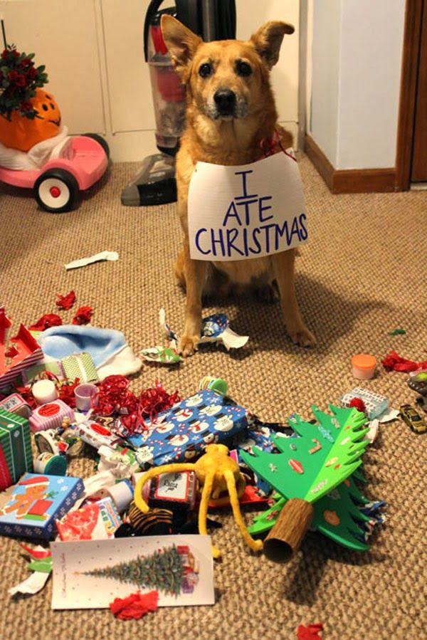 Hey @Erica Cerulo Cerulo Cerulo Wade, I expect to see dog shaming of this nature from you and Jeremy this season!!!
